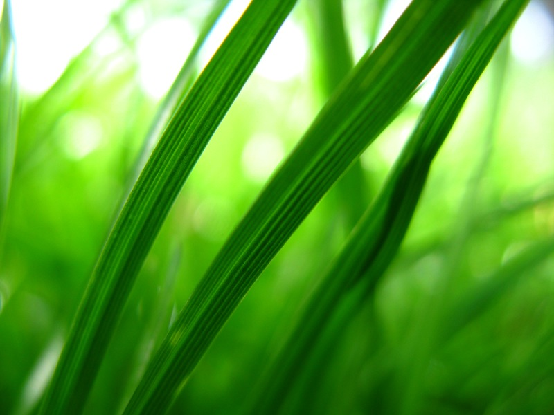 benefits-of-drinking-wheatgrass